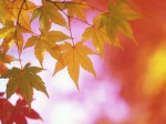 Fall Colours Reports